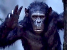 Dawn of the Planet of the Apes — Brand New TV Spot