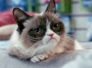 Grumpy Cat's Worst Christmas Ever - Trailer