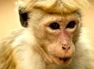 Monkey Kingdom — New Trailer