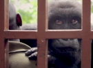 Virunga - Trailer