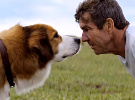 A Dog's Purpose — Trailer