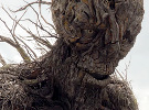 A Monster Calls — Behind-the-Scenes Featurettes