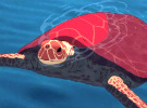 The Red Turtle - U.S. Trailer