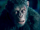 War for the Planet of the Apes — New Trailer