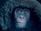 War for the Planet of the Apes — Sneak-Peek Clip: 'Meeting Bad Ape'