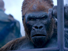 War for the Planet of the Apes — Final International Trailer