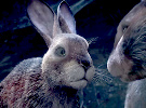 Watership Down — Official Trailer